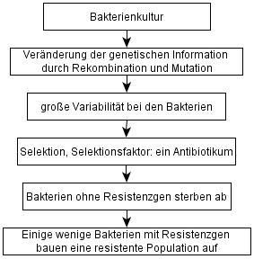 selektion_schema.jpg