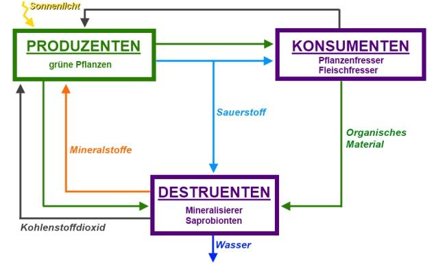 Abbau und Kreislauf der Stoffe