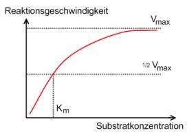 · Die Reaktionsgeschwindigkeit der enzymkatalysierten Reaktionen ist von unterschiedlichen Faktoren abhängig. In diesem Screencast wird die Abhängigkeit von de.